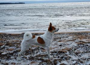 tundra-2012